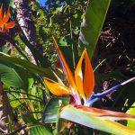 Flowers, Royal Palms