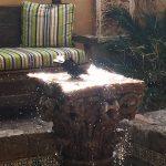 Birdbath, Royal Palms