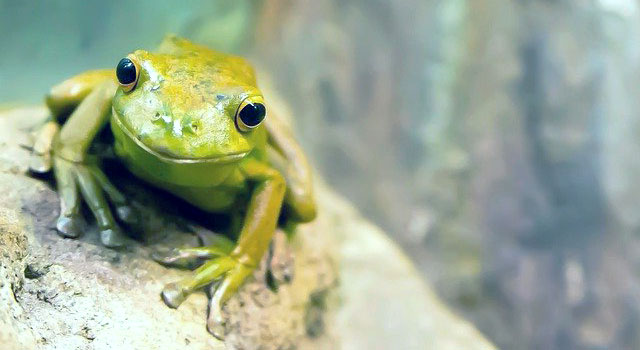 A small frog on a slanted rock faces the viewer.